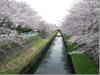 Sakurakawajpg